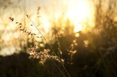 特写镜头烘干了在日出的花与橙色天空 浅深度的域 夏天背景概念 免版税库存图片