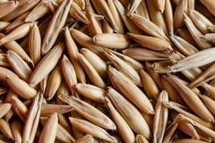 特写镜头燕麦五谷背景 健康食物和农业概念 库存图片