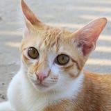 特写镜头猫面孔 免版税库存照片