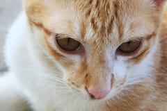 特写镜头猫面孔 库存照片