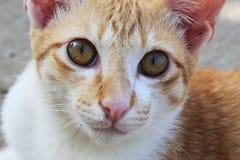 特写镜头猫面孔 库存图片