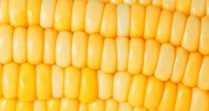 特写镜头玉米 免版税库存图片