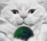 特写镜头白色猫 库存照片