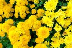 特写镜头美好的花背景 免版税库存照片