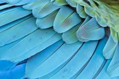 特写镜头羽毛蓝色和金金刚鹦鹉 免版税库存照片