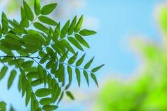 特写镜头绿色在蓝天背景离开 在稀薄的分支的五颜六色的叶子 美丽的公园在夏天 惊人的生态 库存图片