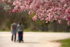 特写镜头草绿色春天 免版税图库摄影