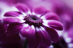 特写镜头虚拟花粉红色 免版税库存照片