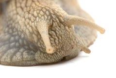 特写镜头蜗牛 库存图片