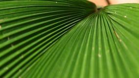 特写镜头被射击植物叶子 影视素材