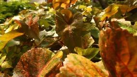 特写镜头被射击植物叶子 股票录像
