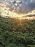 特写镜头被射击植物 免版税库存照片