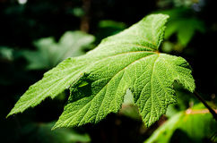 特写镜头详细的叶子在庭院里 库存照片