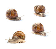 特写镜头高分辨率蜗牛 免版税图库摄影