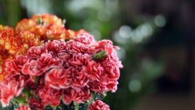 特写镜头,在光的花花束,自转,花卉构成包括明亮黄色,桔子和 影视素材