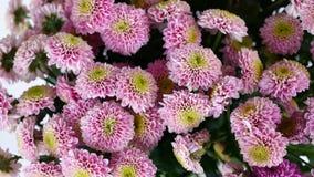 特写镜头,从上面看法,花,花束,在白色背景的自转,花卉构成包括桃红色Santini 股票视频