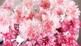 特写镜头,从上面看法,花,花束,自转,花卉构成轻轻地包括浅粉红色的土耳其语 股票录像