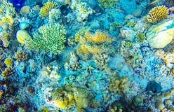 特别下潜在马尔代夫 美好的下潜 库存照片