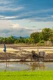 特别拖拉机温床为米做准备调遣与蓝色 免版税库存照片
