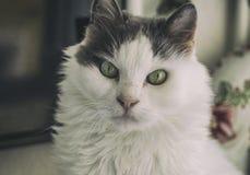 特别看的猫 免版税库存照片