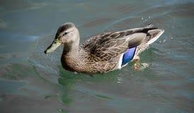 从默特尔海滩的鸟 免版税库存图片