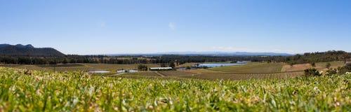 洪特尔谷葡萄园全景, NSW澳大利亚洪特尔谷葡萄园全景, NSW澳大利亚 免版税库存照片