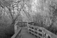 特拉华河结构树 库存图片