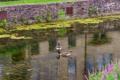 特拉华运河拉船路和鹅,历史的新的希望, PA 库存照片