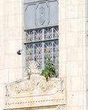 特拉维斯县法院大楼用在飞行中向日葵和鸽子 图库摄影