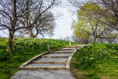 特森公园春天风景有花的在巴尔的摩3月 免版税库存图片