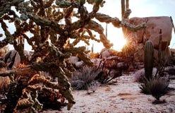 特点美国沙漠风景 免版税库存图片