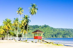 特立尼达 免版税库存图片