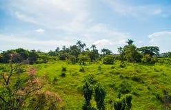 特立尼达landsape 库存照片