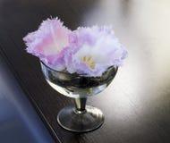 特里郁金香的芽在一个玻璃花瓶的 库存图片