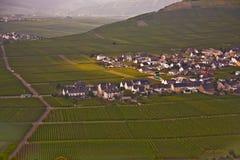 特里滕海姆村庄在河的葡萄园里 免版税库存图片