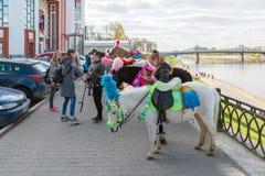 特维尔,俄罗斯-可以07 2017年 骑乘马和小马在江边 免版税库存照片