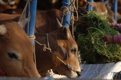 牺牲的动物 免版税库存图片