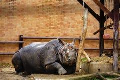 犀牛在动物园里坐 免版税图库摄影