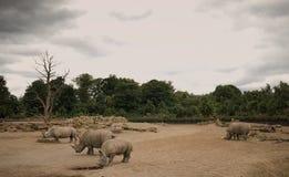 犀牛在肯尼亚山国家公园 库存照片