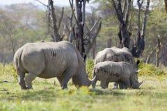 犀牛家庭在肯尼亚 免版税库存图片
