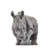 犀牛犀牛雕塑 免版税库存图片