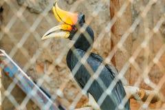 犀牛犀鸟,鸟,动物,野生生物,动物园 免版税库存照片