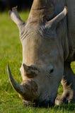 犀牛的画象 肯尼亚 国家公园 闹事 图库摄影