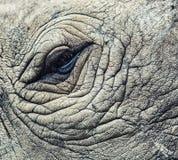 犀牛眼睛 库存照片