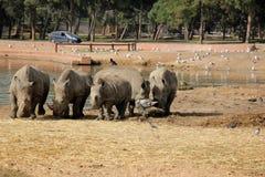 犀牛释放徒步旅行队 库存照片