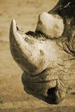犀牛画象 图库摄影