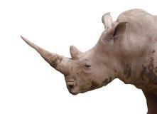 犀牛画象 免版税库存图片