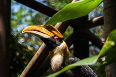犀鸟在密林 免版税库存照片