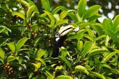 犀鸟头坐一棵树在密林 免版税库存照片