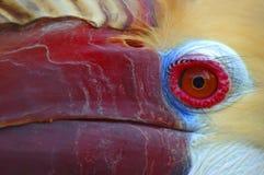 犀鸟 库存图片